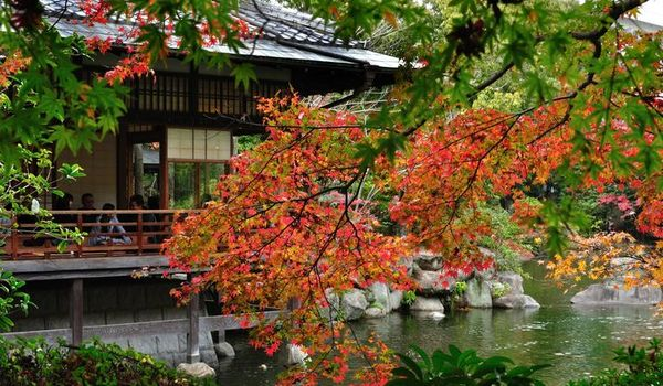 """We share quotes from enthusiasts for """"Startup city Fukuoka"""" telling you our seasonal charm !!  October : Foliage """"Watching the leaves begin to change around Fukuoka in October is stunning.No matter where you are, the city's crisp autumn weather and vibran"""